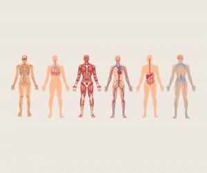 Kako delujemo z maderoterapijo na različne telesne sisteme?