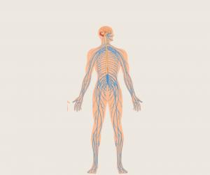 Maderoterapija pospeši limfni sistem in izločanje odpadlih snovi iz telesa.